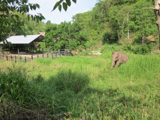 Mae Chaem, Thaïlande : grazing area onsite for the elephants and Thong Dee's gated night area