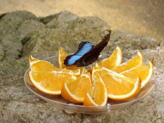 Butterfly World & Gardens: Butterfly World