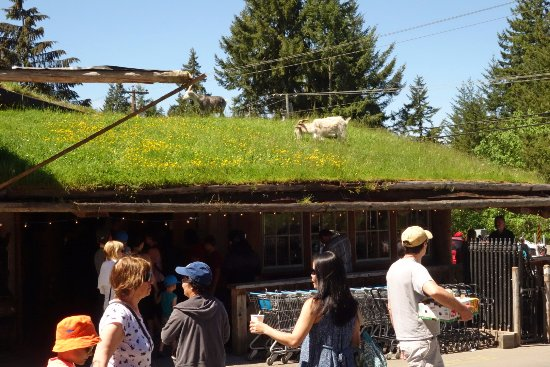 Coombs, Canadá: Goats On The Roof