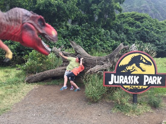 Kaneohe, HI: The famous Jurassic Park tree