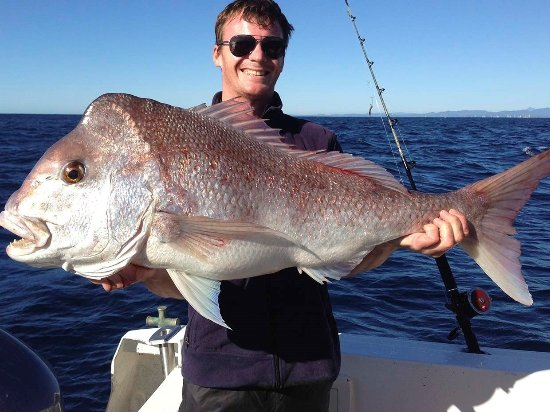 Main Beach, Australien: Snapper
