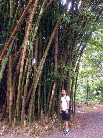 Kaneohe, Havai: photo0.jpg