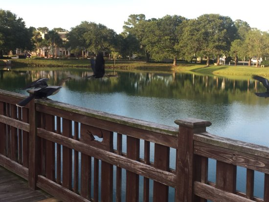 Ponte Vedra Beach, FL: Birds & walking trail around lake. Do not feed wildlife. Dogs must be on leash.