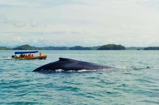 Whale Watching en Island Tour in de ...