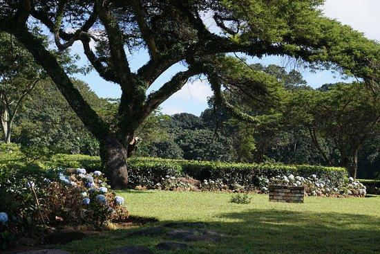 Thyolo, Malawi: photo2.jpg
