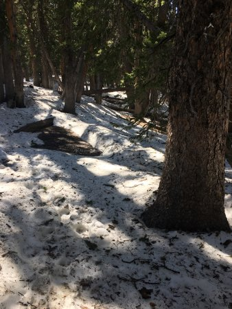 Parque Nacional Great Basin, NV: Snow covered area, which was how we lost the trail