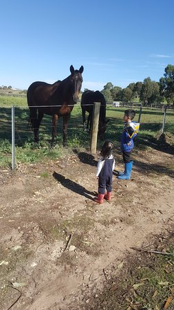 West Swan, ออสเตรเลีย: horses