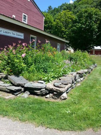 Waterbury, VT: Herb Garden at Vermont Liberty Tea