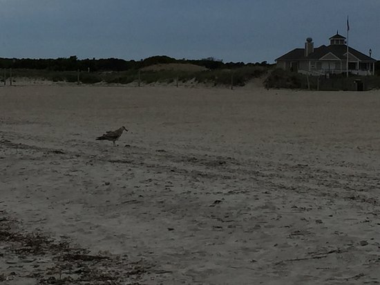 Seagull Beach: photo0.jpg