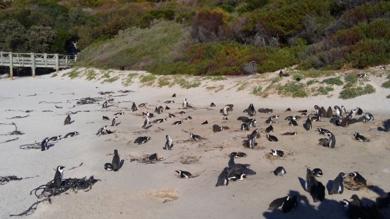 Simon's Town, South Africa: KIMG0558_large.jpg