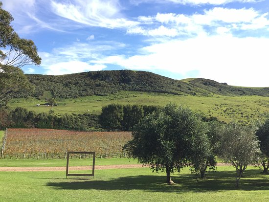 Waiheke Island, New Zealand: View at Stoney Ridge winery