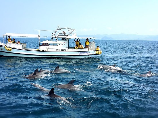 Kazusa Dolphin Watching