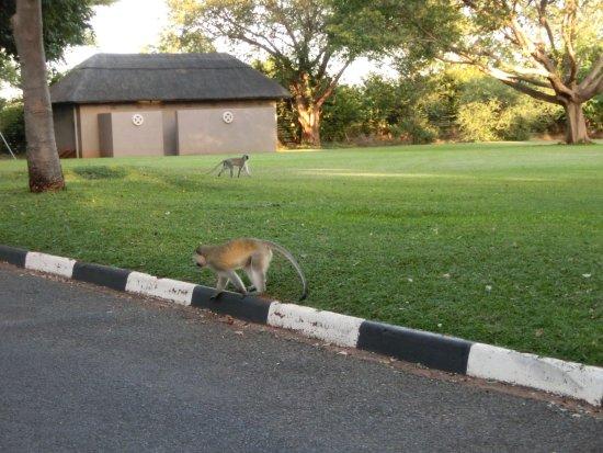 Elephant Hills Resort Picture