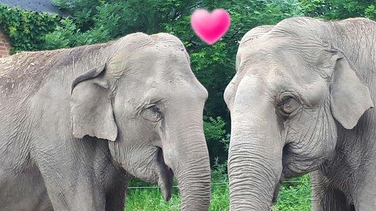 Elefantenhof Platschow Kritik