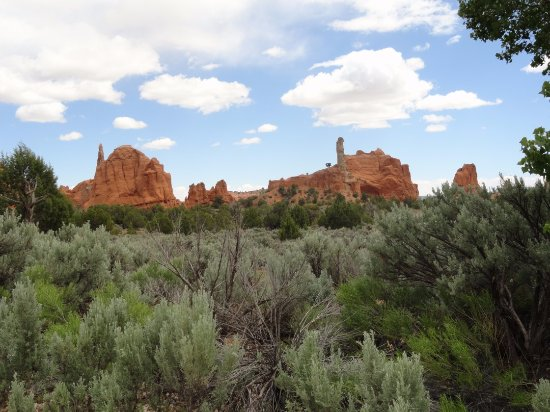 Cannonville, UT: Greenery and rock formations