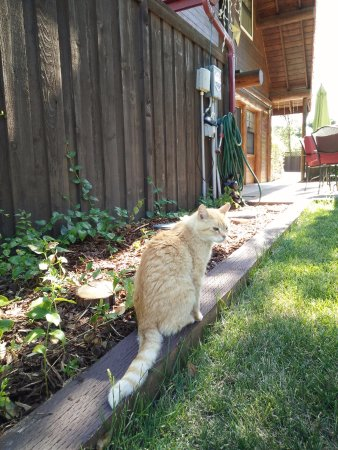 Ahwahnee, แคลิฟอร์เนีย: 主人飼養的貓咪