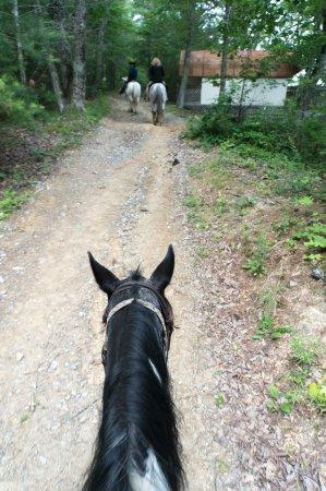 Walden Creek Horseback Riding Stables: rider's view