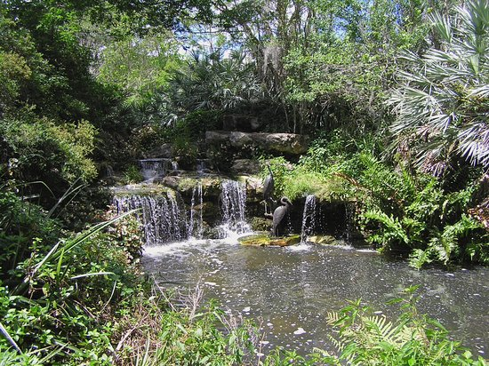 Kanapaha botanical gardens gainesville fl top tips - Botanical gardens gainesville fl ...
