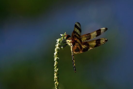 Insects- Paynes Prairie. Photo by Susannah Peddie.