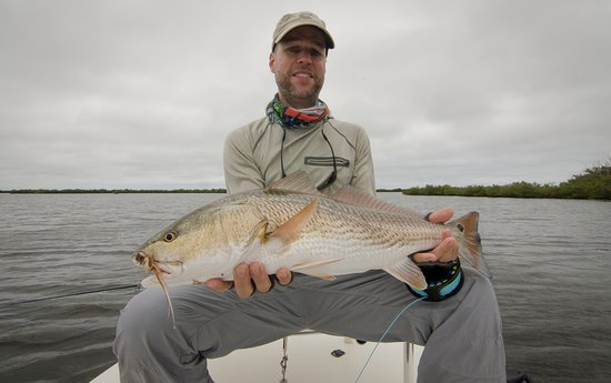 Edgewater, Flórida: redfish on a shrimp pattern