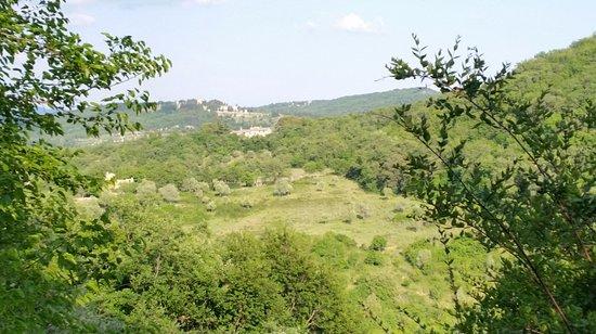 Ricavo Photo