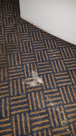 Baymont Inn & Suites Michigan City: stains all over carpet...