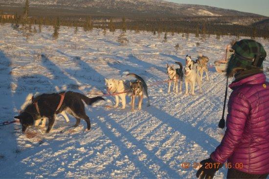 EarthSong Lodge - Denali's Natural Retreat: photo0.jpg