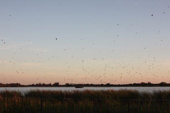 Hotel Toruno: Abendlicher Vogelschwarm
