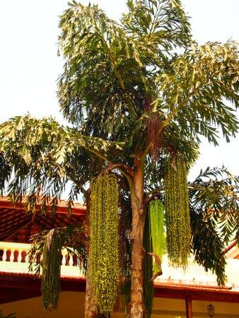 Devaaya Ayurveda & Nature cure Centre Photo