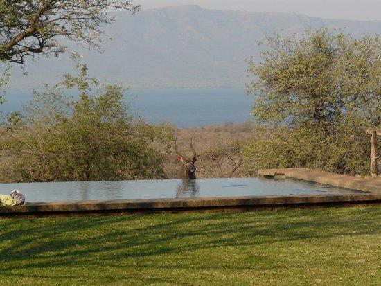 Pongola, África do Sul: piscina
