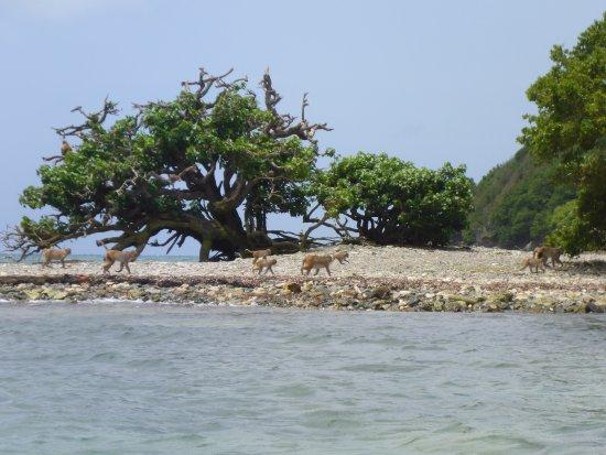 Barefoot Travelers Kayak Tour to Monkey Island: Monkeys on the island