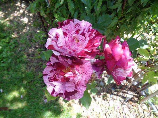Le Clos Fleuri