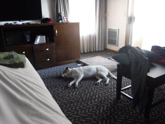Bodega Coast Inn & Suites: Very comfy room