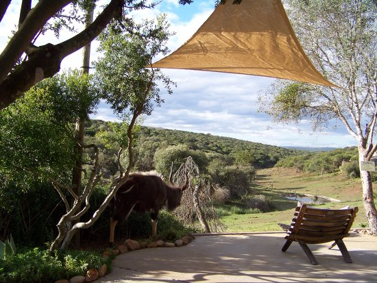 Amakhala Game Reserve, Sudáfrica: The veranda by the bar.