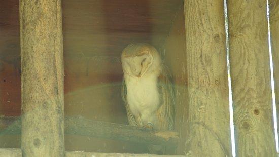 Chapel-en-le-Frith, UK: Chestnut Centre Otter, Owl and Wildlife Park