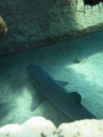 Banyan Tree Divers : Second dive