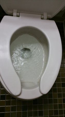 Toilet seat was gross, black mold in toilet - Picture of Ramada by ...