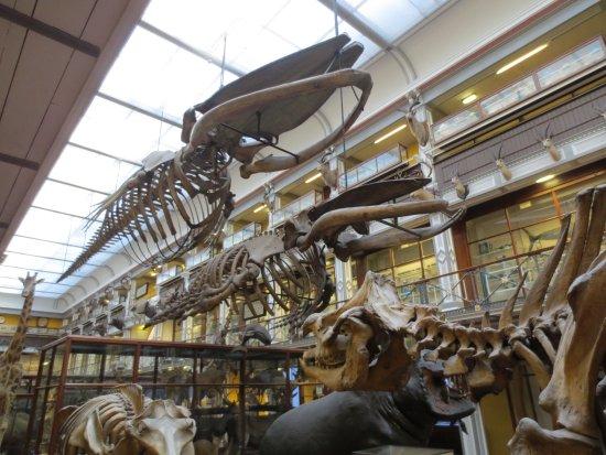 National Museum of Ireland - Naturhistorie