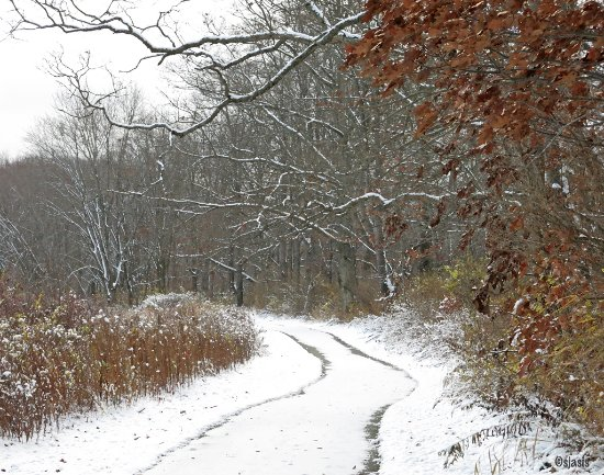 Allegany, Νέα Υόρκη: Allegheny River Valley Trail in Winter