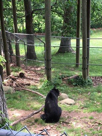 Western North Carolina Nature Center : photo3.jpg
