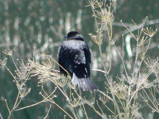 Shilo Inn Suites Hotel - Klamath Falls: Wild Bird Conservatory 25 miles from Shilo Inn.