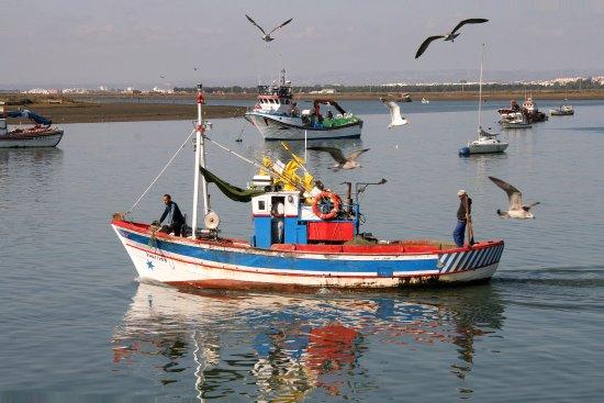 Costa de la Luz, Spain: El bullicio de la actividad en el puerto de Isla Cristina. De los puertos más importantes de Esp