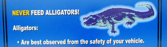 Ritch Grissom Memorial Wetlands : WHAT TO DO ABOUT WETLANDS GATOR