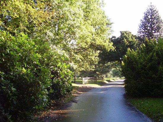 Rozelle Park - the driveway