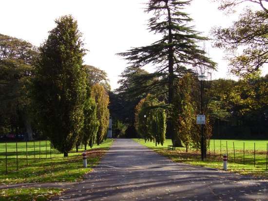 Rozelle Park - back fields