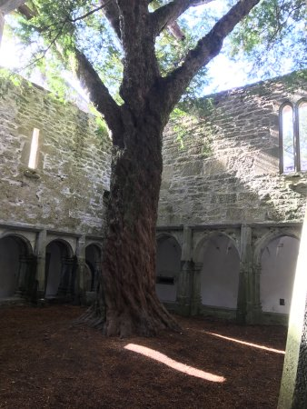 Muckross Abbey : The yew tree and courtyard
