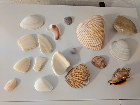 Weston's WannaB Inn: Just a few of our favorite shells