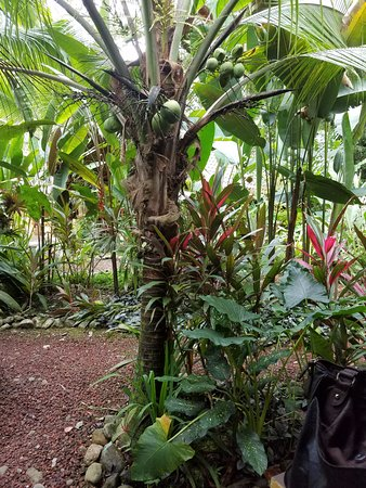Cocles, Costa Rica: Pathway to our bungalow