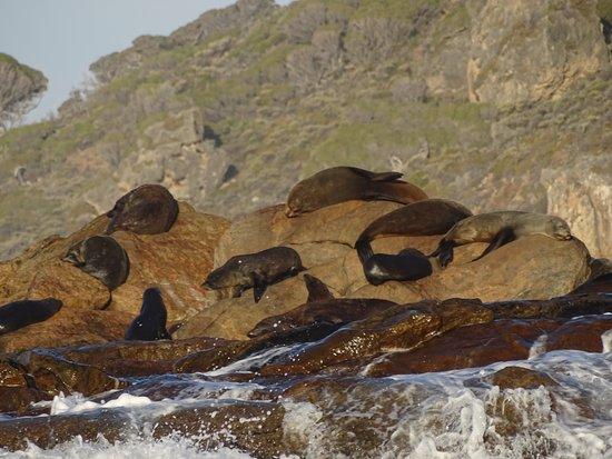 Dunsborough, Australia: The fur seals love their secret hidaway