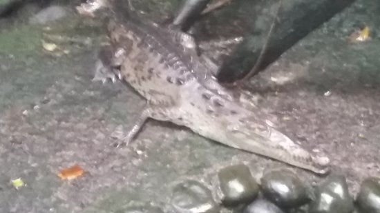 Arenal Eco Zoo : 20170611_120152_large.jpg